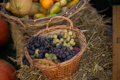 Colorful grape in basket with apples Royalty Free Stock Image