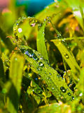 Colorful grass. Dew drops resting on vibrant blades of grass Stock Images