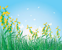 Colorful grass background Royalty Free Stock Photos
