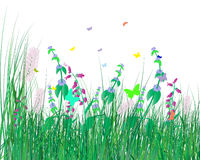 Colorful grass background Royalty Free Stock Photo