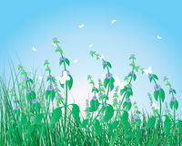 Colorful grass background Royalty Free Stock Image