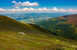 Colorful grass on mountain hillside. Lovely landscape in late summer royalty free stock photo