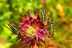 Colorful grasshoppers Stock Photo