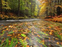 Colorful gravel on bank at autumn mountain river. Bended branches with last leaves above water stock images