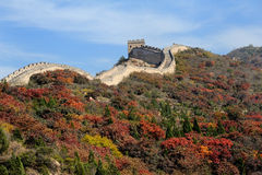 Colorful Great Wall in autumn Stock Image