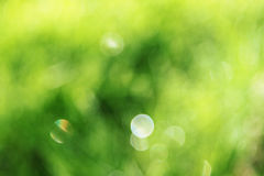 Colorful green background Royalty Free Stock Image