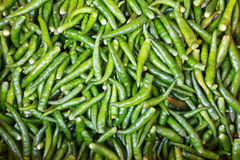 Colorful green chilies  pepper Stock Images