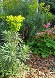 Colorful green foliage with pink flowers in garden mulch bed. In bright Spring sunshine Stock Photos