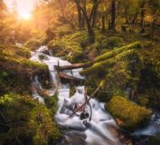 Colorful green forest with little waterfall at sunset Stock Image