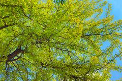 Colorful green fresh foliage of trees. With a blue sky on the background stock photos