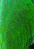 Colorful green parrot wing Plumage Stock Images