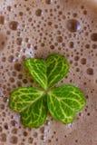Dark irish beer Stock Photography