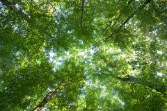 Colorful green treetops Royalty Free Stock Photo