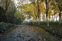 Colorful green way  crossing the shenshan  garden wuhu, anhui Stock Images