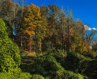 Lovely early autumn scene in Charlottesville, Virginia. Colorful green, yellow, and orange trees on a lovely autumn day with blue skies in Charlottesville stock images