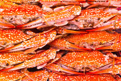 Colorful grilled crabs and Thai style sauce Stock Photography