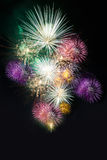 Colorful group of firework for celebration Royalty Free Stock Photo