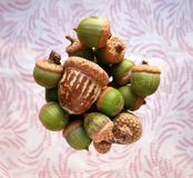 Colorful group of floating acorns. Bright tabletop view of group of green acorns with one distressed brown acorn, in a blurred wine glass, set on a pink, swirly Stock Images