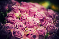 Colorful grunge roses Royalty Free Stock Image