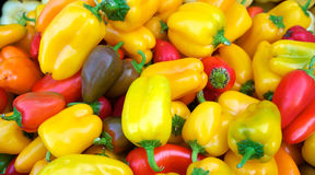 Colorful Habanero peppers Royalty Free Stock Photo