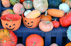 Colorful halloween pumpkins and gourds display Stock Photo