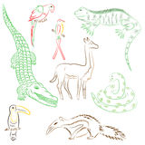 Colorful Hand Drawn Animals of South America. Doodle Drawings of Iguana, Crocodile, Parrot Ara, Toucan, Hummingbird,Anaconda Stock Image