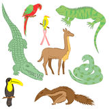 Colorful Hand Drawn Animals of South America. Doodle Drawings of Iguana, Crocodile, Parrot Ara, Toucan, Hummingbird,Anaconda Royalty Free Stock Photos
