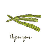 Colorful hand drawn card with asparagus Royalty Free Stock Image