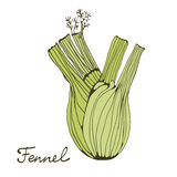 Colorful hand drawn card with fennel Stock Photos
