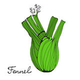 Colorful hand drawn card with fennel Stock Image