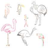 Colorful Hand Drawn Exotic Tropical Birds. Doodle Drawings of Parrot, Ostrich, Emu, Hummingbird, Hoopoe and Toucan. Sketch Style. Vector Illustration Royalty Free Stock Photography