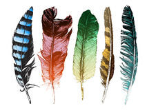 Colorful hand drawn feathers on white background Royalty Free Stock Photography