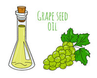 Colorful hand drawn grape seed oil bottle Stock Photos