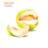Colorful hand drawn of melon.vector illustration Stock Image