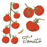 Colorful hand drawn set of tomatoes Stock Photos