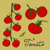 Colorful hand drawn set of tomatoes. Illustration in vector format Stock Photography