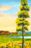 Poplar in the field. Colorful hand drawn watercolour sketch drawing on paper backdrop with space for text on glowing heaven. Green lawn in vibrant summertime Royalty Free Stock Images