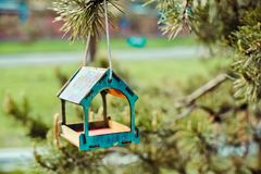 Colorful handmade bird feeder on the fir branch outdoor with beautiful blurred background. royalty free stock photos