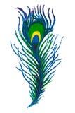 Colorful handmade Peacock feather rangoli. Stock Photography