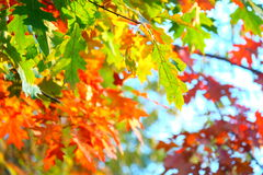 Colorful happy autumn leaves Stock Photography