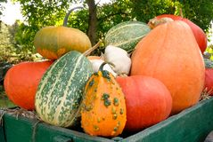 Colorful harvest. Pile of colorful pumpkins on a green cart stock image