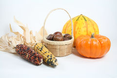Colorful Harvest. A colorful harvest includes a basket of chestnuts, a yellow Carnival squash, a miniature pumpkin and Indian corn stock images