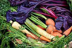 Colorful Harvest Royalty Free Stock Photo