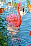 Pink flamingo. Colorful Hawaiian scene with tall pink flamingo and blue Royalty Free Stock Photos