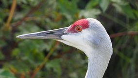 Colorful head of a crane royalty free stock images