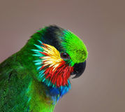 Colorful head of a parrot Stock Photo