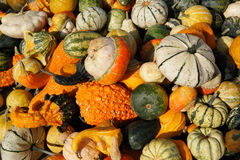Colorful heap of assorted pumpkins Royalty Free Stock Photo