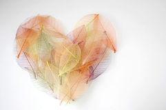 Colorful heart with nature. Colorful dried leaves in shape of heart Royalty Free Stock Images