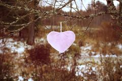 Colorful heart on tree branch in autumn garden. stock photo