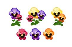 Colorful heartsease Stock Photos